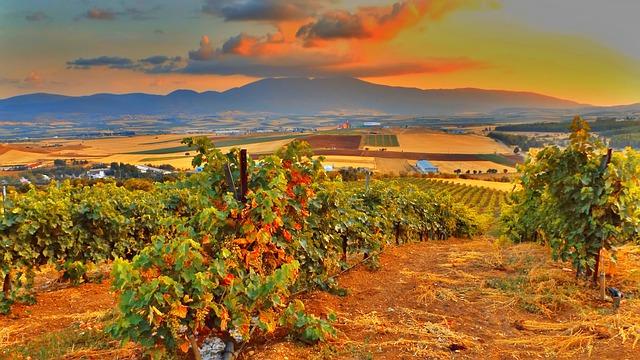 Vin biodynamique et vin bio, quelles différences?